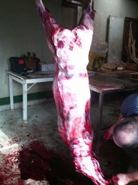 battue au sanglier de 110kg