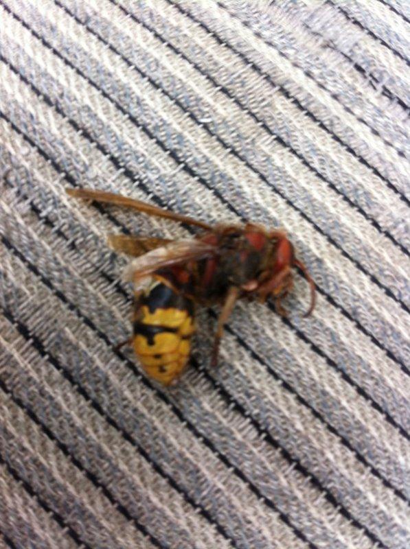 Bug in