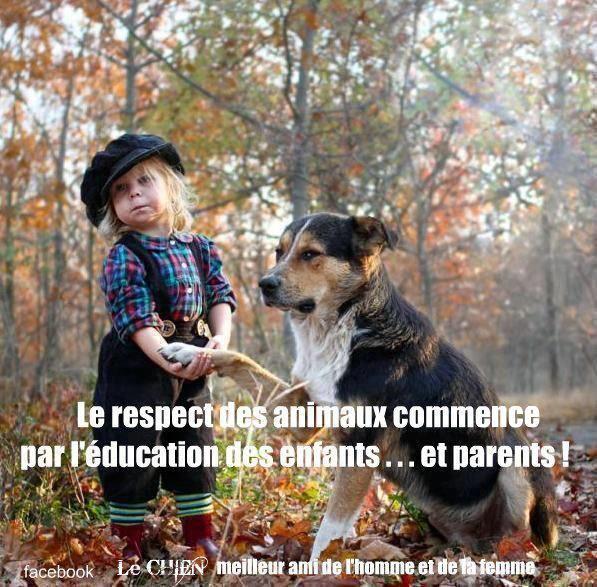 Blog De Monalbumdeloups Page 200 La Terre Des Loups