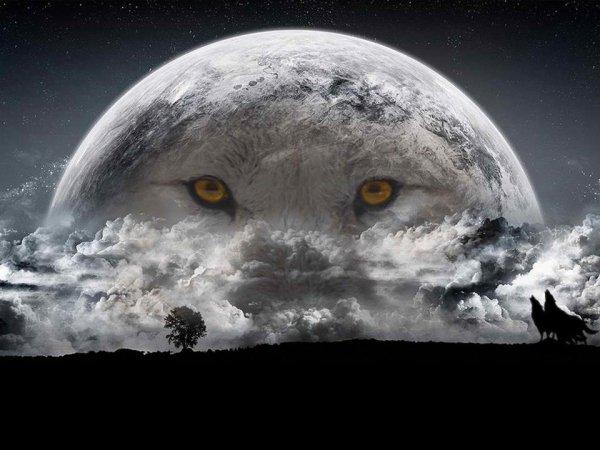 «Nous n´habitons plus la même planète que nos aïeux : la leur était immense, la nôtre est petite.»  pétition à signer en bas de l'article et lisez  bien l'article avant  merci  à tous ceux qui le feront et partagez ou remixez si vous le désirez au plus nous toucherons de monde ils auront une chance de survie aussi minime qu'elle soit  mais c'est déjà énorme !!! MERCI