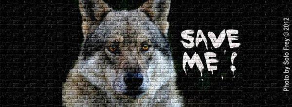 SONDAGE   votez  merci  PARTAGEZ REMIXER  FAITES CIRCULER MERCI POUR EUX   !!!!!!!!!!!!!!   quand tu regardes au plus profond des yeux d'un loup, tu vois ton âme!!!  ne l'oubliez pas !