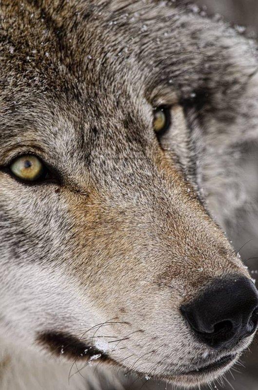 Aussi longtemps que les hommes massacrent des animaux, ils s'entre-tueront. En effet, celui qui sème la graine d assassin et la douleur ne peut récolter la joie et l'amour. - Pythagore