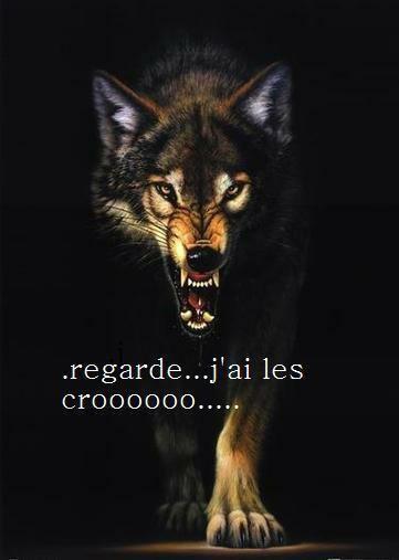 et   ENCORE   et  après  vous allez encore avoir pitièe de ces espagnols lol !!!!!!!!!!!!!!! mère nature s'est retournée simplement contre eux du aux mal qu'ils font !!!!!!!!!!  mais  non   entre  les corridas et comment ils traitent leurs chiens  désolée  ils peuvent crever que ca  me fera ni chaud ni froid  les espagnols colonisateurs et esclavagistes ne l'oublions pas !!!!!!!!!!!!!  les médias on les fait taire mais  moi  jamais on m'empéchera de dévoiler des choses vraies et réelles quoi que l'on me fasse   désolée  les choses doit etre vu même si parfois c'est horrible  mais je m'en fout  j'ose  le publier !!!!!!!!!!!  a  faire  passer  merci  pour ces galgos ces pauvres bêtes qu'ont t'ils fait aux espagnols pour mériter autant de souffrances  lààààààààààààààààààà