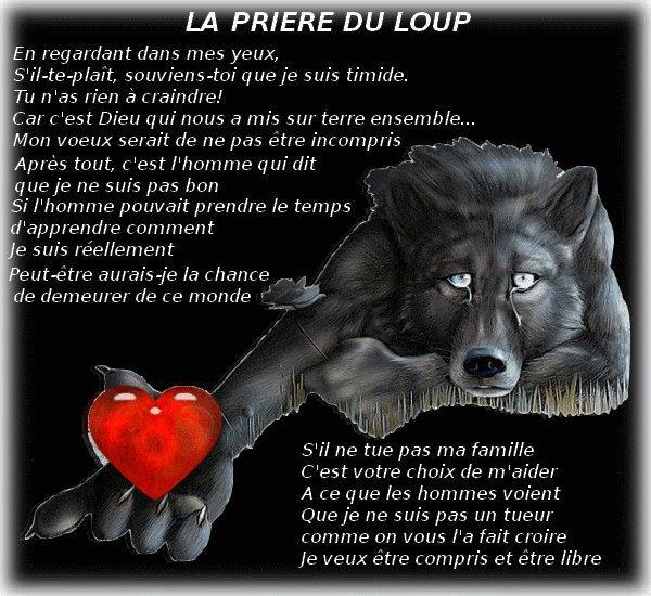message   a   transmettre     visionnez  la  jusqu'au  bout !!!!!!!!!!!!!  si  aprés   cela   vous   comprennez pas   c'est   plus   des   neuronnes   qui   vous  manque   mais   un  coeur   et  un   cerveau   sans   coeur   ne   sert   a   rien  !!!!!!!!   remixez   svp   pour  les  loups