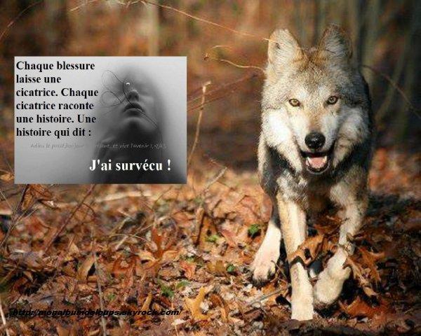 Très bonne soirée à tous protégeons nos loups merci !!!!!!!! - la terre  XI53