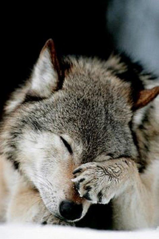 complainte d'une louve