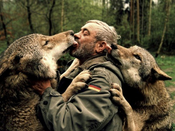 HOMMAGE A Werner Freund  la semaine lui sera consacré avec explication et biographie sur son amour inconditionnel pour les loups