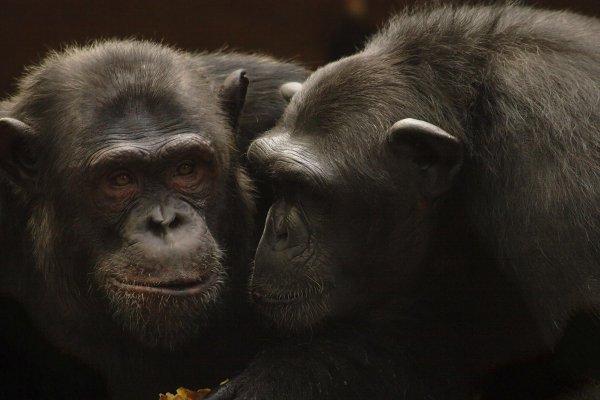 Sentience des animaux : Sensibilité et conscience des animaux sauvages