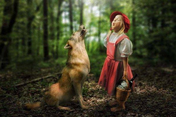 THEME ASSOCIE A CE JOUR  :   comportement de la louve et ses petits.......