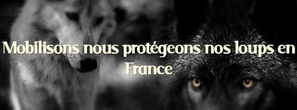 FRANCE, TES LOUPS ONT BESOIN DE TOI !!!!!!!!!!!!!!!!!!!!!!!!!!!