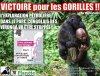 VICTOIRE POUR WWF !!!  L'EXPLORATION PÉTROLIÈRE DANS LE PARC CONGOLAIS DES VIRUNGA VA ÊTRE STOPPÉE !