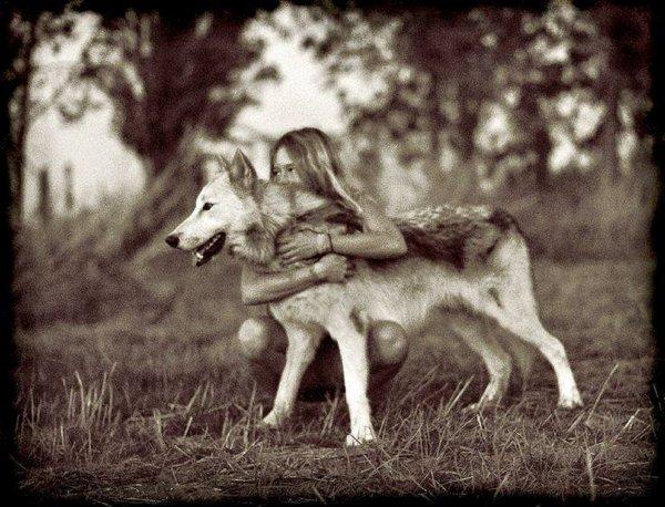 Qui le sait, quand on les flingue en France dès qu'ils osent y montrer leurs museaux  !!! Le peuple loup est enfin un peuple traqué, haï et massacré par des crétins et des ignorants, surtout en France, et qu'il importe impérativement de protéger. Plus que tout autre, son histoire s'est liée à la nôtre jusque dans la mythologie et l'imaginaire des enfants. Une planète privée de loup serait inconcevable.