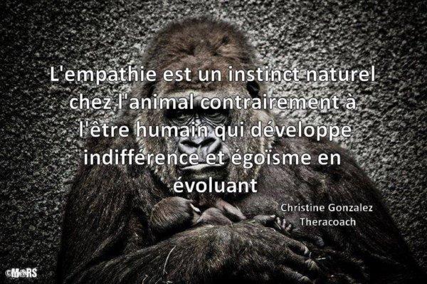 je réédite un article pour sensibiliser  les humains quand ils abandonnent un animal ...