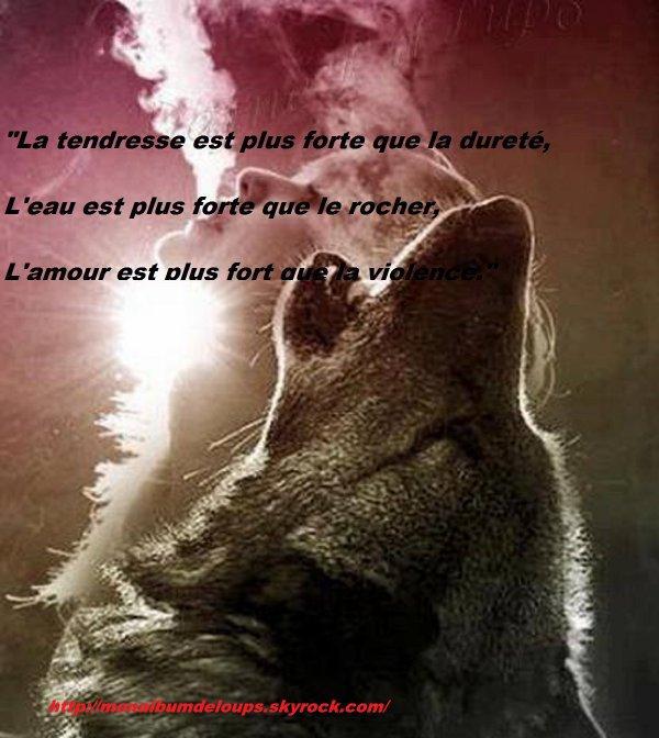 Lundi  je vais être  absente  quelques jours  je n'ai pas le choix   je reviendrais  dès que je peux si je vais bien   et  n'oubliez  pas  nos loups  ils ont besoin de nous