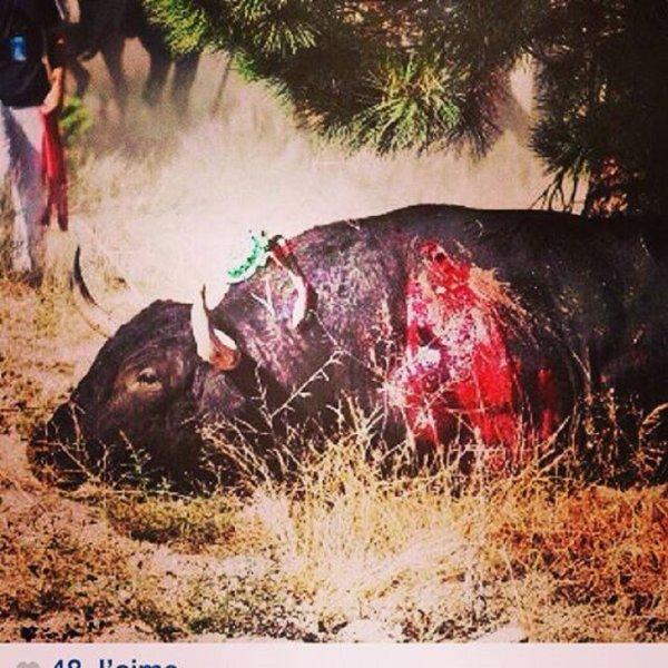 Un hommage aux personnes faisant ce qu ils peuvent pour la condition animale. Un grand merci a tous.