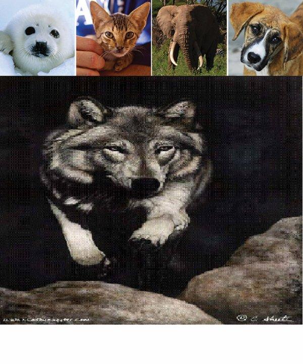 Cette année encore, le 4 octobre, IFAW fêtera la journée mondiale des animaux. Celle-ci revêt pour chacun d'entre nous une importance particulière car elle met à l'honneur tous les animaux qu'ils soient à plumes, à poils, à écailles, domestiques ou sauvages. Ce jour spécial nous invite à nous unir pour les animaux, que l'on soit une association, un particulier, un média ou une entreprise. Et cette année, c'est cette opportunité que nous avons saisie.