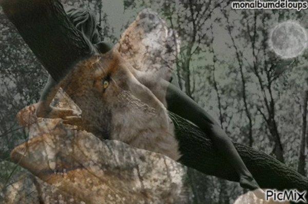 BONNE ACTION Partagez la bande-annonce de #Grizzly et contribuez à la protection d'espèces menacées !Partagez cette vidéo avec vos amis ! CLIQUEZ  SUR LE LIEN