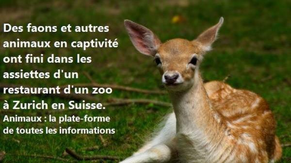 ARTICLE CHOC !!! où va notre humanité  là !!!! SCANDALEUX : UN ZOO MET SES ANIMAUX AU MENU DE SON RESTAURANT EN SUISSE...!