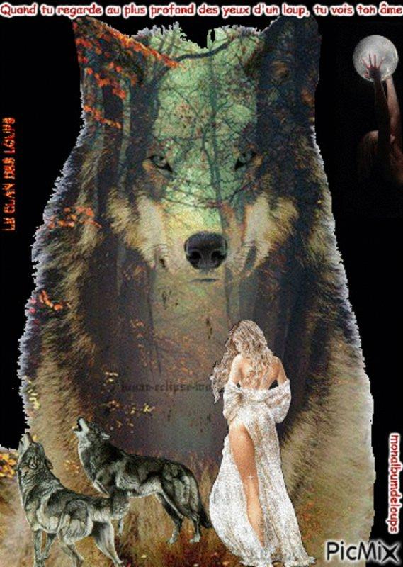 étonnant et impossible  pour les anti loup   mais vrai !!!!!!!!!!!!!!!  désolée pour ceux qui n'aiment pas le loup Comment les loups ont reconstitué la biodiversité au Yellowstone