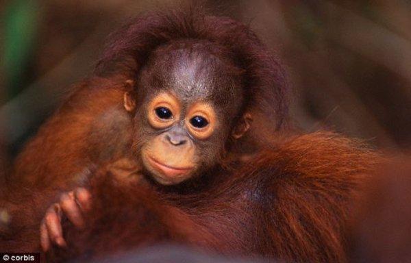 L'huile de palme, un poison mortel !  C'est à un combat urgent auquel nous vous demandons de participer en soutenant l'action du CCFD-Terre Solidaire !  beaucoup d'animaux meurent dans des conditions atroces du à la déforestation  merci  à  tous !!!!