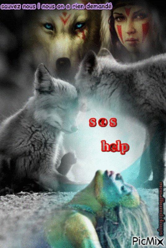 Une chose certaine, je ne comprendrais jamais l'humain qui reste indifférent à la souffrance animale pour moi un humain qui n'est pas capable de ressentir la souffrance ni la deviner n'est pas capable d'amour donc d'aimer et de respecter quoi que ce soit   jusqu'a sa propre personne   SIGNER UNE PETITION POURTANT NE PRENDS QUE 1 MN  mais non  l'indifférence totale  ne venez plus me dire que certains ou certaines d'entre vous êtes là pour aider les animaux et encore moins que vous les aimez !!!!!!!!!!!!!