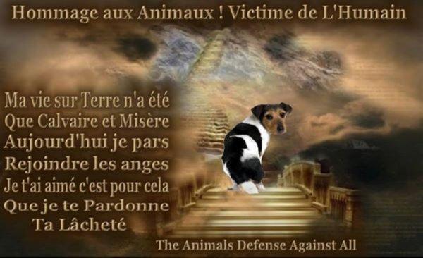 invitation de la part des sans voix  faites circulez  !!!  hommage à tous les animaux qui ont subit les atrocités horribles de l'humain et l'euthanasie sans raison juste pour le confort juste comme une chose que l'on se sert et que l'on jette !!!!!!!  à méditer  et oui  avec mon humour  !!!!!!!!