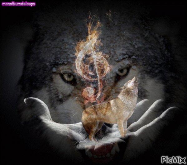 de pire en pire l'humain du n'importe quoi on se croirait dans un western : La tête d'un loup mise à prix 2 000 euros dans la Meuse