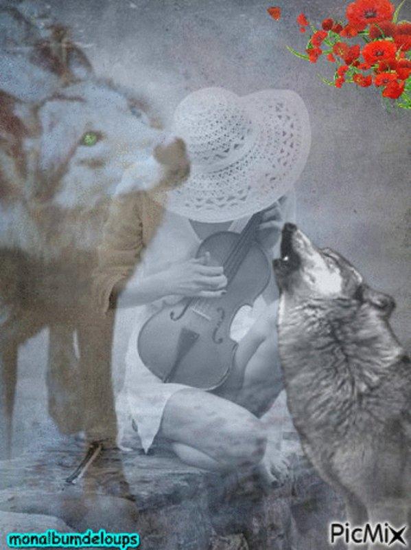 l'expérimentation de Ségolène Royal tourne à la boucherie Deux loups mâles et une jeune femelle ont été tués...