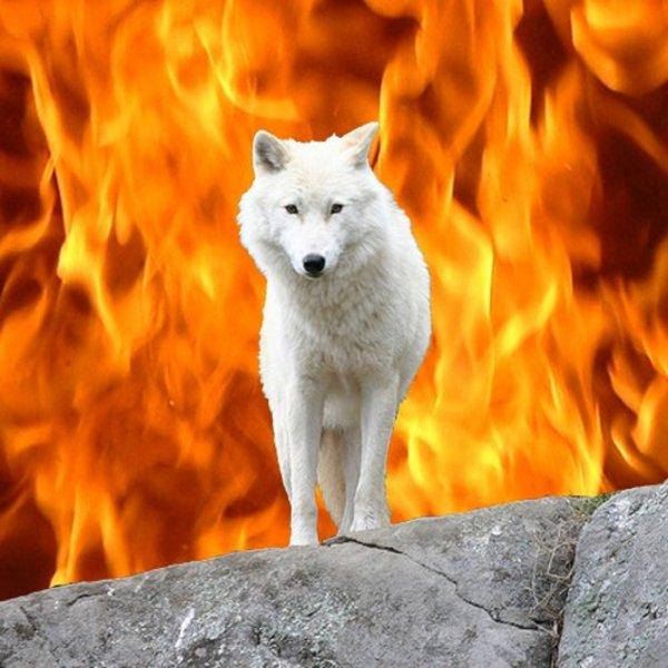 voilà  je  vous convie  tous à être présents pour défendre la vie de nos loups parceque on est venue me le prier de le faire  je ne peux pas rester sans rien faire pour eux  !!!!   le 27 novembre à paris  je compte sur vous