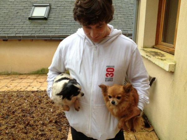 AVIS  URGENT !!!!  Une soixantaine de chiens de race cherchent une famille