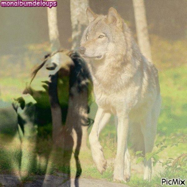 Les 5 sens du Loup