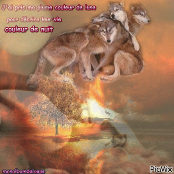 LE TRISTE NOËL DU CHAT ABANDONNÉ !!!  sensibilisons l'humain a prendre ses responsabilités quand il prend ou offre un animal n'est pas un jouet ni un objet  partagez au max  merci  pour eux