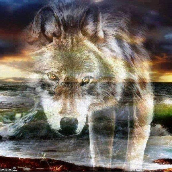 le loup dans tout ses états