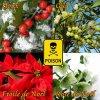 ces 4 plantes sont dangereuses pour nos animaux  à l'approche des fêtes soyez vigilant !!!