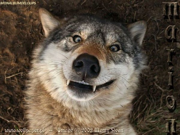 LIVRE COUP DE COEUR    Le Making Of Chris de la Louiseraie  suivie d'une superbe vidéo pour nos loups