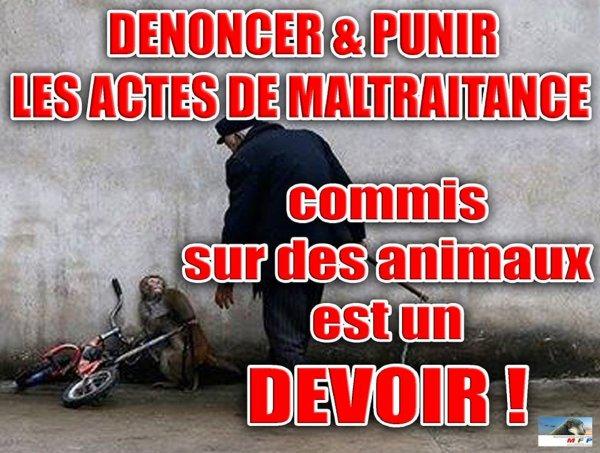VOUS ÊTES TÉMOIN D'UN ACTE DE MALTRAITANCE COMMIS SUR UN ANIMAL, DÉNONCEZ-LE !