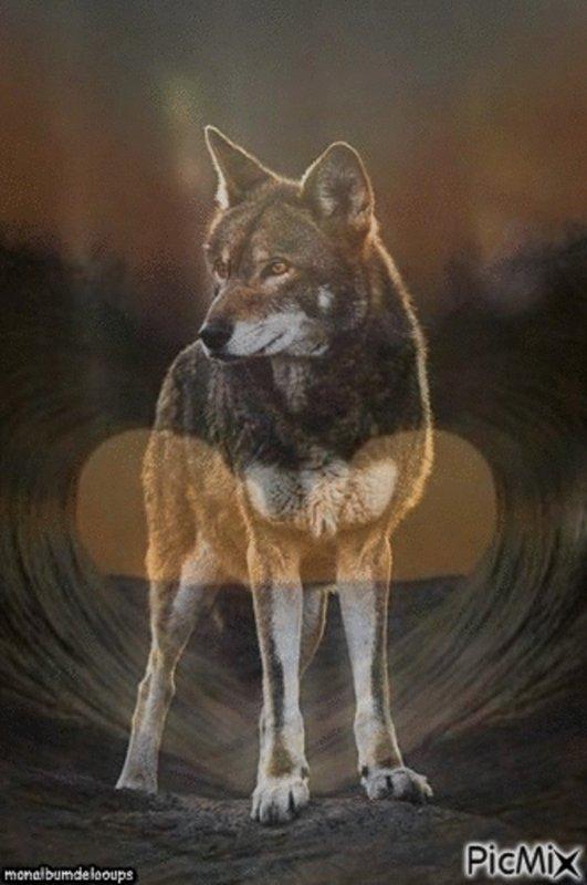 Faut-il avoir peur du loup ???  surement pas du tout mais de l'humain  OUI   !!!!