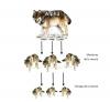 La hiérarchie entre les loups