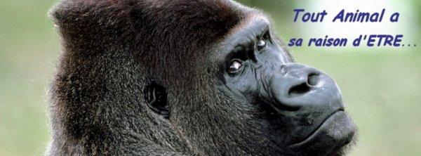 un théme que je n'ai pas encore abordé  :  La communication avec les animaux