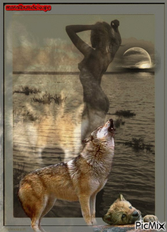 Loup de la côte, loup des îles :  Les loups des îles situées au large de la côte britanno-colombienne ont un régime alimentaire composé à 90 % de fruits de mer, ce qui inclut le saumon, la palourde et les moules