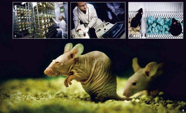 Souffrance et terreur dans les laboratoires