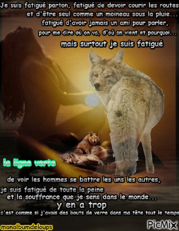 Super Blog de MONALBUMDELOUPS - Page 42 - la terre des loups - Skyrock.com DI99