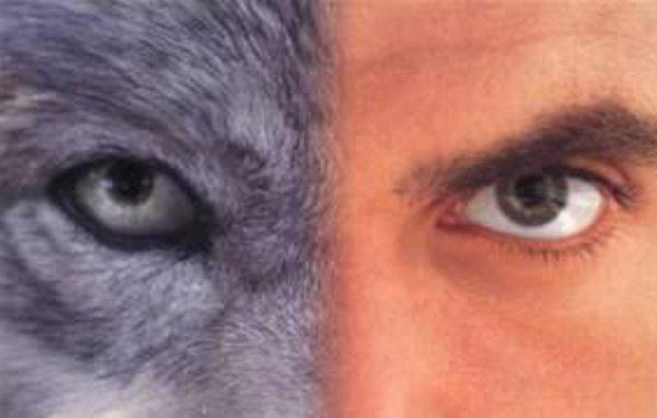 Le loup, l'homme et le chien, vivre ensemble sur Terre : Partie 3   L'homme : son mode de vie & Le chien : son mode de vie (qui comprend son passé de loup et sa domestication)