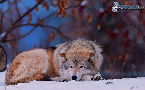 Aider la faune, partager cette vidéo. merci à ceux qui le feront