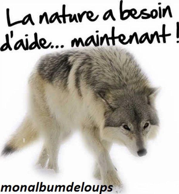 I/ L'influence de l'Homme sur le comportement animal