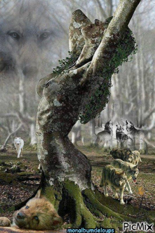 « Agissez pour ce monde comme si vous deviez vivre mille ans, et pour l'autre comme si vous deviez mourir demain. » « La terre et les loups sont lourds d'enseignement. Ils nous  apprennent la modestie. » SAUVONS NOS LOUPS !!!
