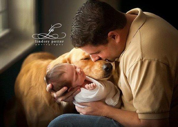 Si les chiens comprennent l'homme, c'est grâce à leurs ancêtres les loups