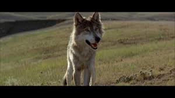 Danse avec les loups différences entre le Roman et le Film