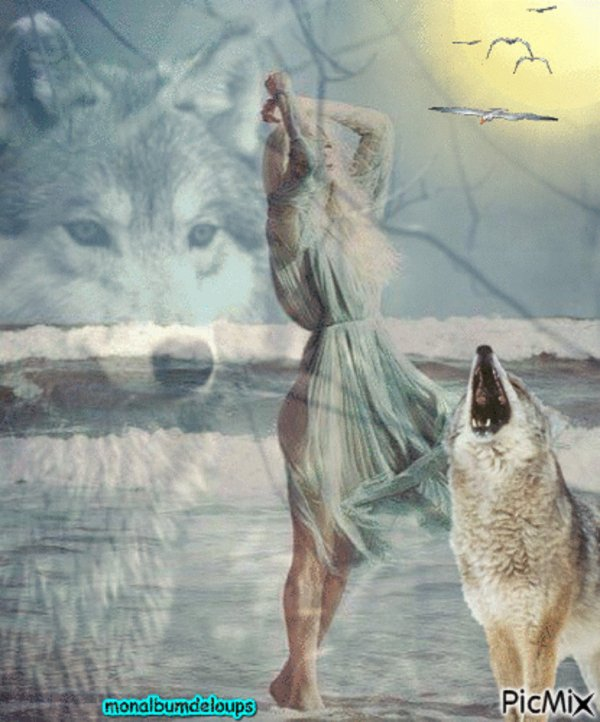 MAUVAISE NOUVELLE :'(  : Le loup bientôt tiré en c½ur du parc du Mercantour?
