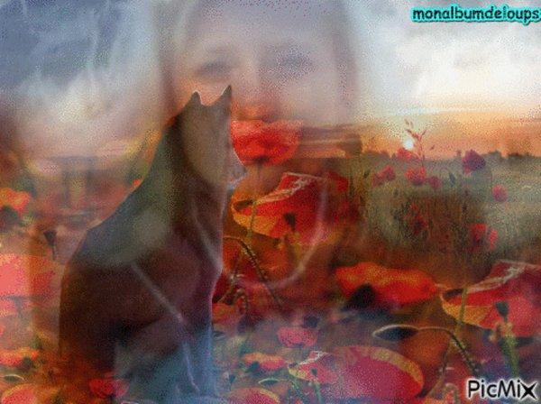 quand tu regardes au plus profond des yeux d'un loup, tu vois ton âme